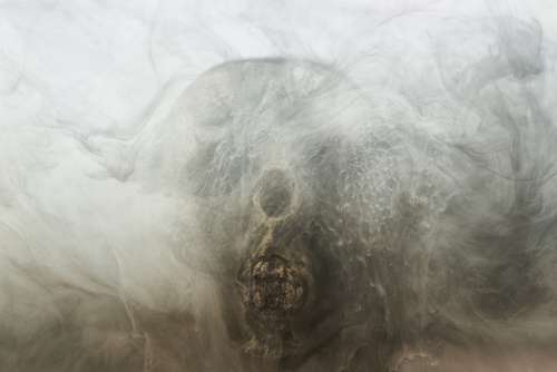 Grey Skull Dry Head Skeleton Dead Death Bone