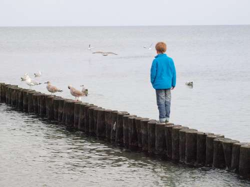 Groynes Child Sea Wide Dared Courageous Series