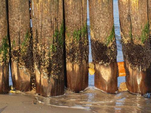 Groynes Coast Baltic Sea Breakwater Fouling