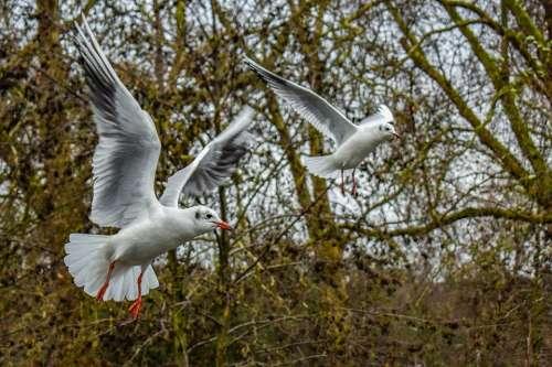 Gull Bird Seagull Flying Freedom Animal Nature