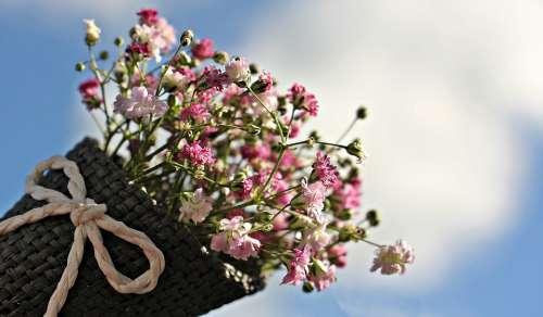 Gypsophila Flowers Ornamental Flower