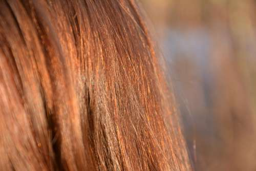 Hair Red Detail Macro Hairstyle