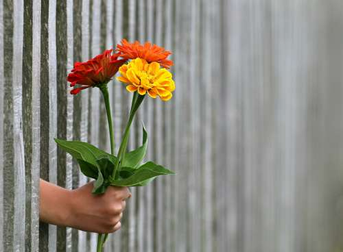 Hand Gift Bouquet Congratulation Love Give Fence