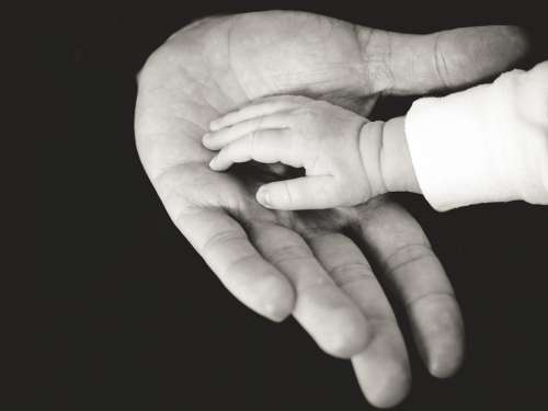 Hands Baby Child Adult Childhood Family Human