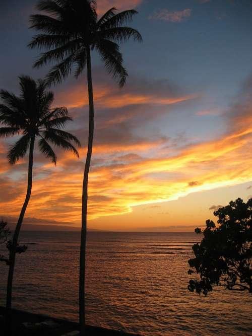 Hawaii Sunset Tropical Palm Trees Beach