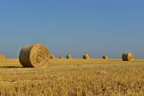 Hay Straw Bales Hay Bales Straw Harvest Rural