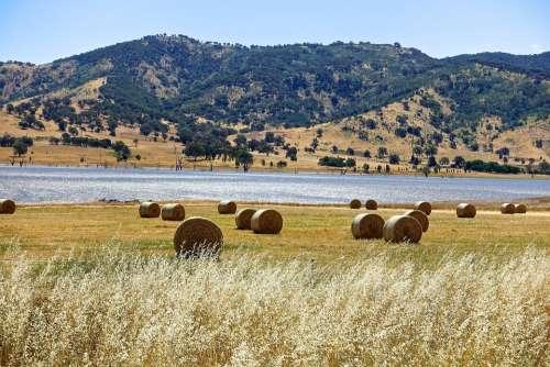 Hay Bales Harvest Hay Agriculture Bale Field Crop