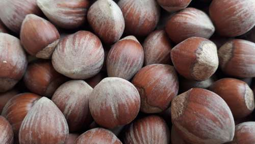 Hazelnut Food Nature Delicious Organic Green