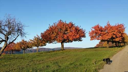 Herbst Baum Autumn Tree Nature Fall
