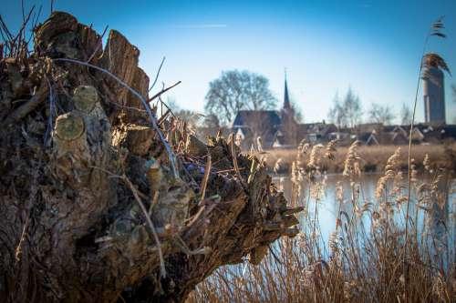 Holland Landscape Willow Netherlands Polder