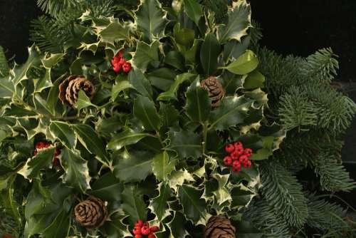 Holly Acorn Cherries Ivy