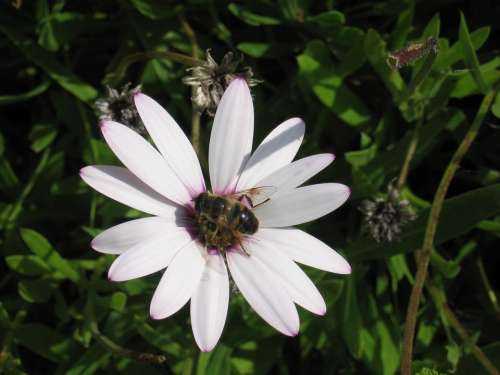 Honey Bee Flower Bee Blossom Bloom Insect Summer