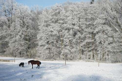Horn-Bad Meinberg Wilberg Horses Winter Lip