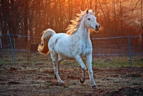 Horse Mold Thoroughbred Arabian Pasture