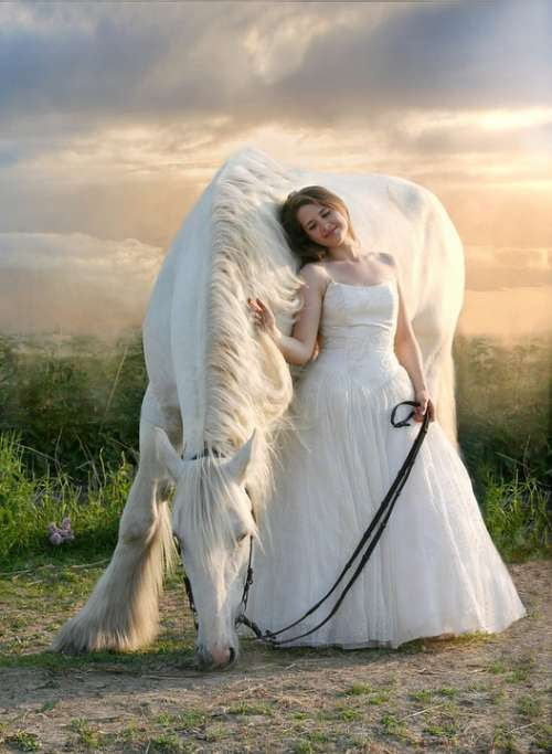 Horse Equine White Horse White Dress Friendship