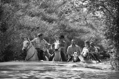 Horse Water Jumper Horseback Riding Animals Race