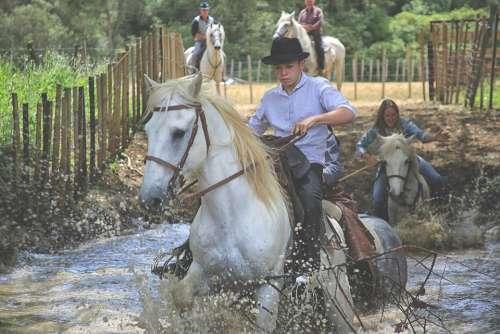Horse Mane Nature Equine Mammals Animals White
