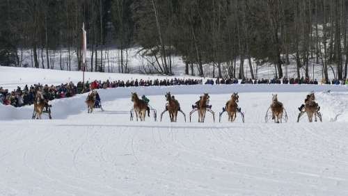 Horse Winter Snow Horses Nature Animal