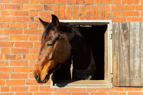 Horse Head Animal Horse Head Portrait Farm Mane