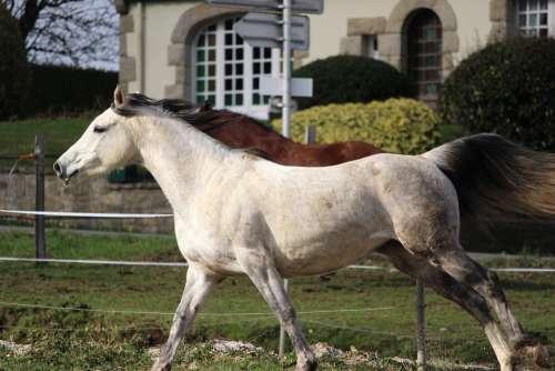 Horse Horses Nature Animals Equine Mare Mammals