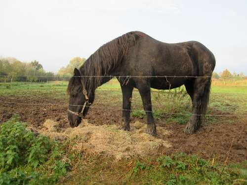 Horse Whey Filthy Dirt Straw Hay Nature