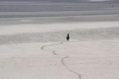 Horse Beach Sea Sand Ocean Bay Sum