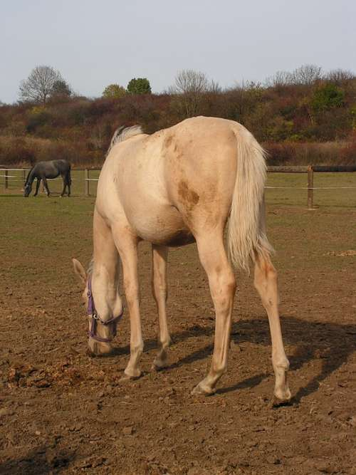Horse Grazing Range