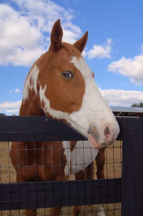 Horse Sky Mammal Farm Nature Field Equine