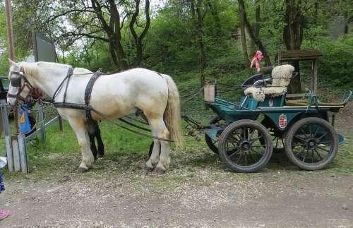 Horse-Drawn Carriage Horse Transport Nostalgia