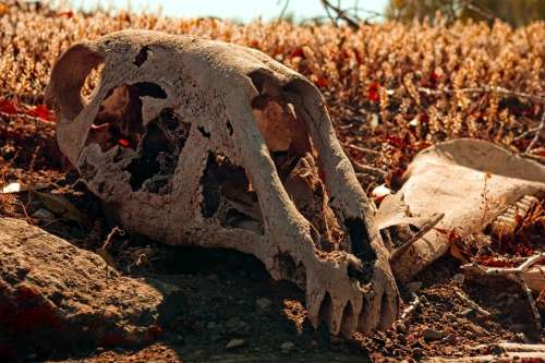 Horse Skull On Sod Roof Skull Bone Death Dead