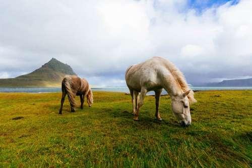 Horses Grazing Landscape Wild Mane Animal Pasture