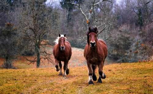 Horses Animals Nature Horse Equine Mane Farm