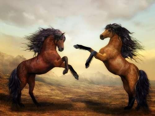 Horses Wild Horses Animals Wild Stallion Ride