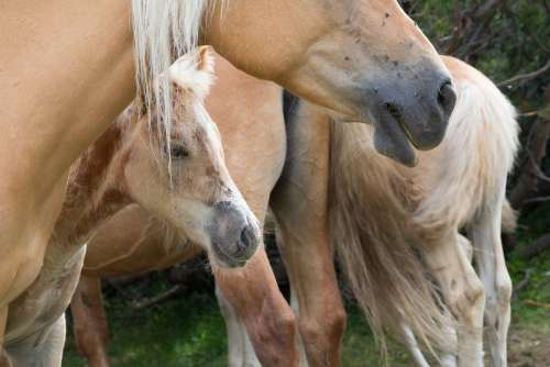 Horses Wild Equestrian
