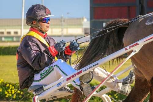 Horses Racing Trot Racecourse Animals Mammals