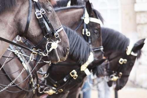 Horses London England