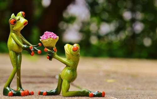 I Beg Your Pardon Marriage Proposal Excuse Me Frog