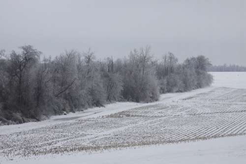 Ice Snow Landscape Farm Trees Winter Cold White
