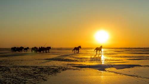 Ice Car Care Fishing Horse Sunrise Landscape Sky