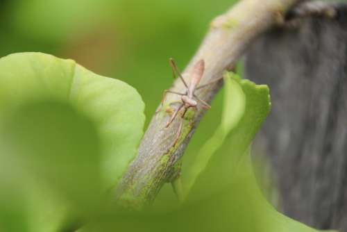 Insect Praying Mantis Nature Animal Green Biology