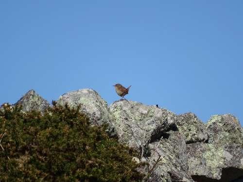 Ireland Bird Nature Birds Landscape