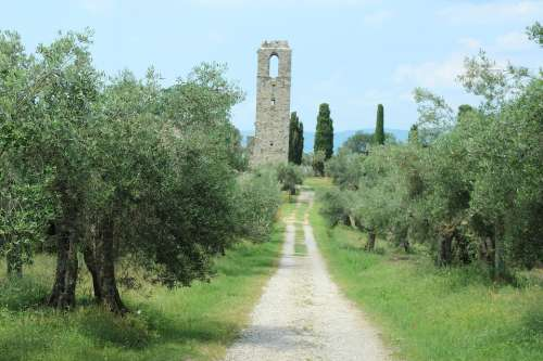 Italy Ruin Olive Trees Away Summer Landscape