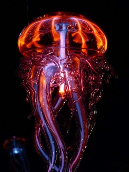 Jellyfish Luminous Jellyfish Light Light Phenomenon