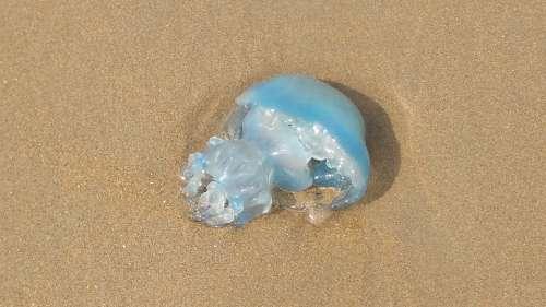 Jellyfish Beach North Sea