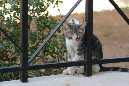 Jerusalem Israel Garden Gethsemane Cat