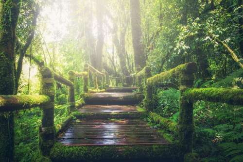Jungle Pathway Steps Way Sunlight Walkway Forest
