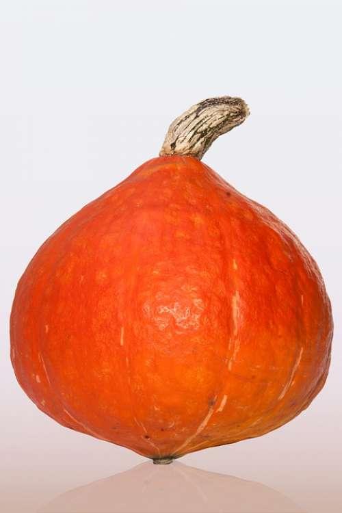 Kabocha Japanese Giant Pumpkin Cucurbita Maxima