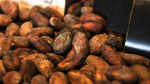 Kakaobean Kakao Chocolate Bean Food Cocoa