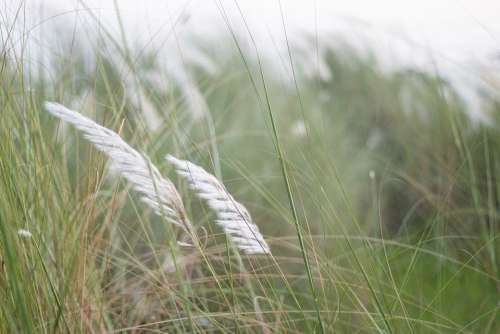 Kashful Catkin Nature Flower Natural