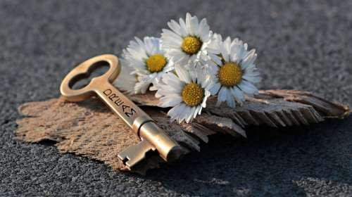 Key Heart Daisy Love Wood Valentine'S Day Symbol